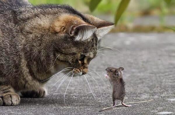 ネズミ 9
